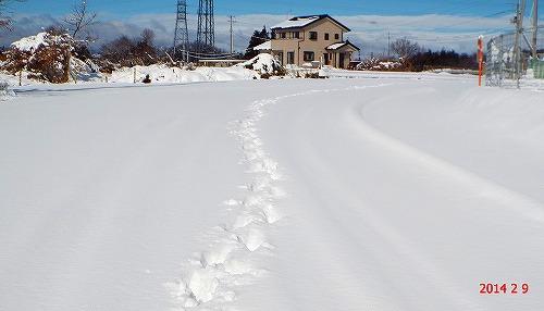 s-雪国⑨
