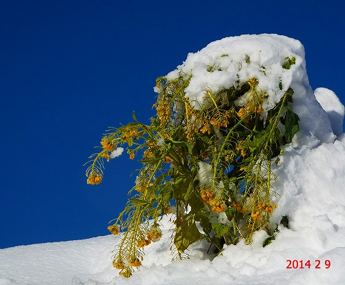 s-追加の雪景色③