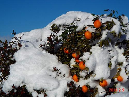 s-追加の雪景色②