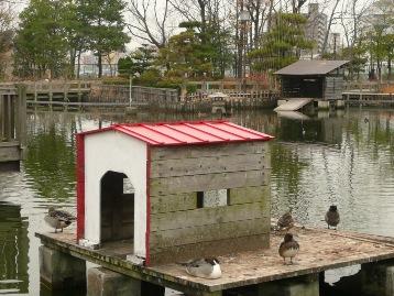 20131218白鳥小屋修復 (1)圧縮