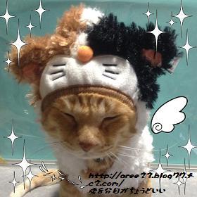 お洒落②(ミケ猫)