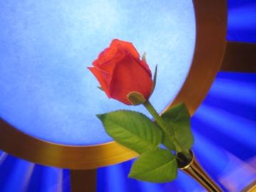 エレベーター内の薔薇