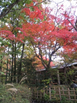 敷地内の紅葉