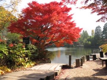 ・・金鱗湖の紅葉