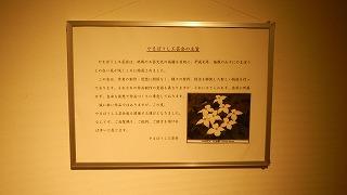 H26年11月やまぼうし工芸会展 025