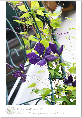 g6-violet.jpg