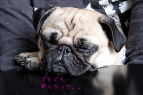 眠くなって・・・