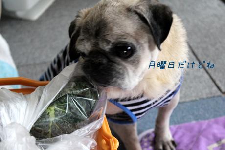 お野菜きたね