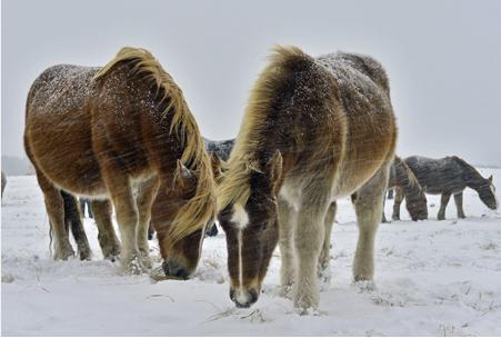 horse jan 19 2014