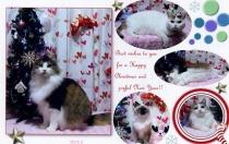 9-201101クリスマスカード007