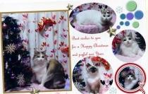 9-201102クリスマスカード005