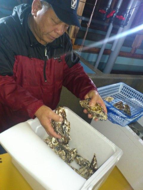 牡蠣の選別作業