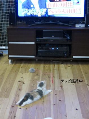 テレビ鑑賞中