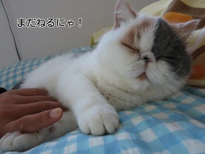 もっと寝たいにゃ~!