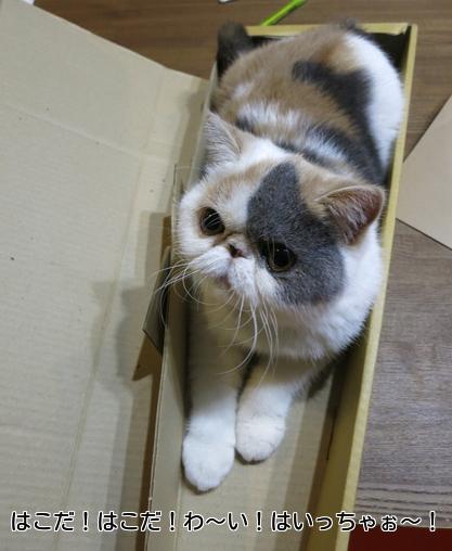 すぐ見つけて箱にはいる
