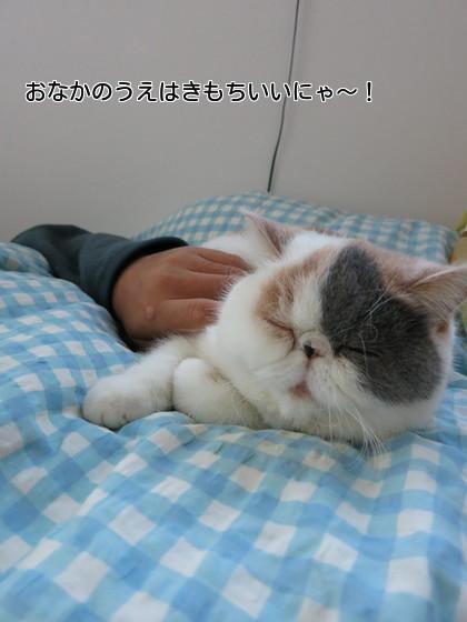 とぉさんのお腹で寝るのは気持ちいいにゃ!