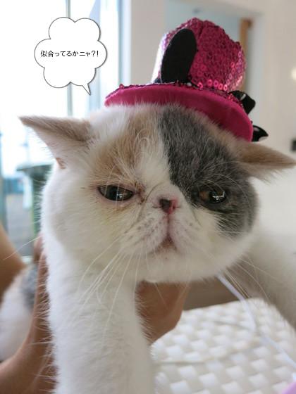 帽子のピンを乗っけてみたよ!