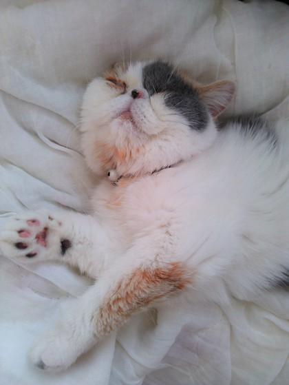 スースー寝息が!
