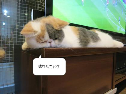 サッカーして疲れたらしい。