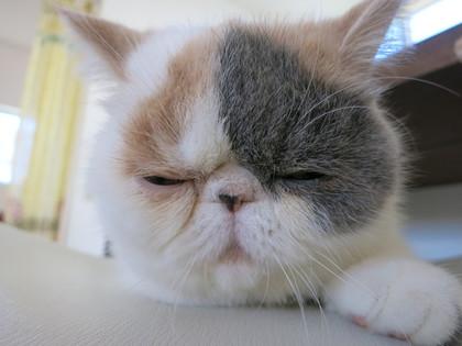 今日は眠いにゃん