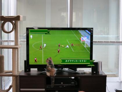 あずきちゃんサッカーをする?!