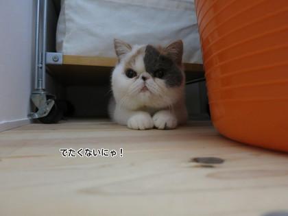 かわいい~~~!