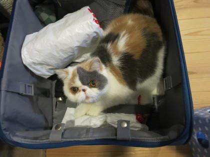 とぉさんの旅行鞄に入って、、、