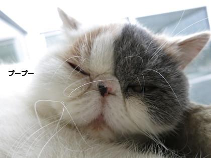 ぷーぷーいいながら爆睡