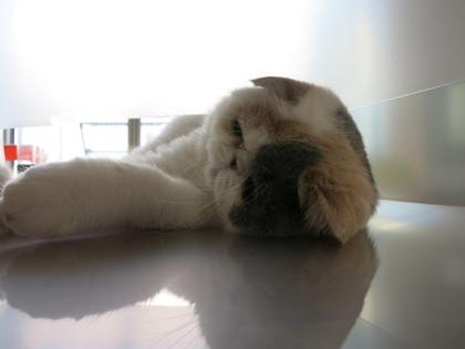 なんだか疲れたな~