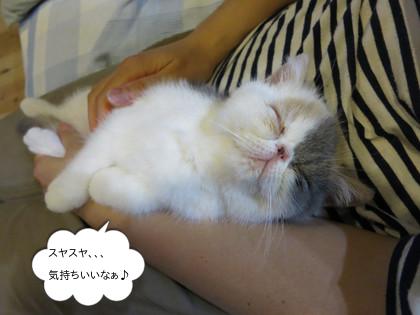 私の腕の中で、、、可愛すぎる!