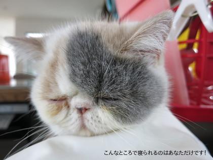 寝ちゃいましたよ、、、