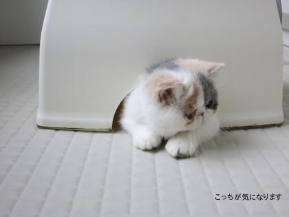 お風呂場の椅子に隠れてます