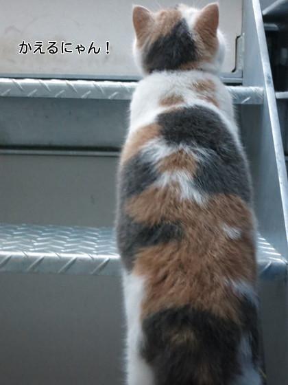 上にあがります。