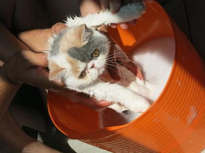お風呂開始〜!