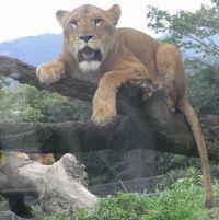safari1.jpg