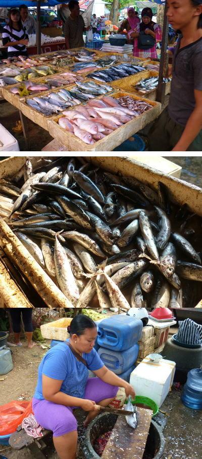 魚を買うブログサイズ