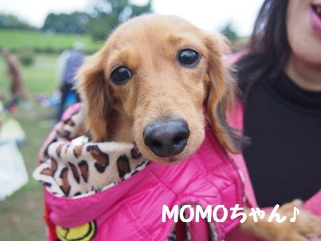 MOMOちゃん