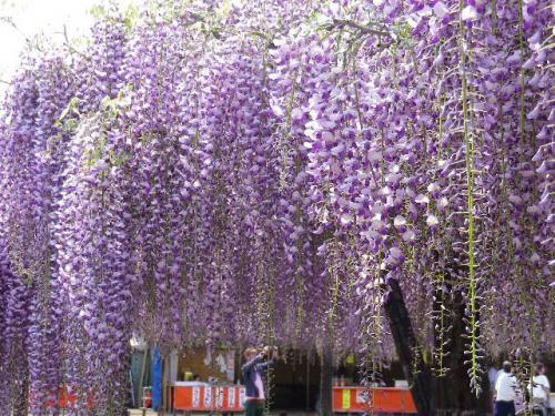 fuji_convert_20130502104325.jpg