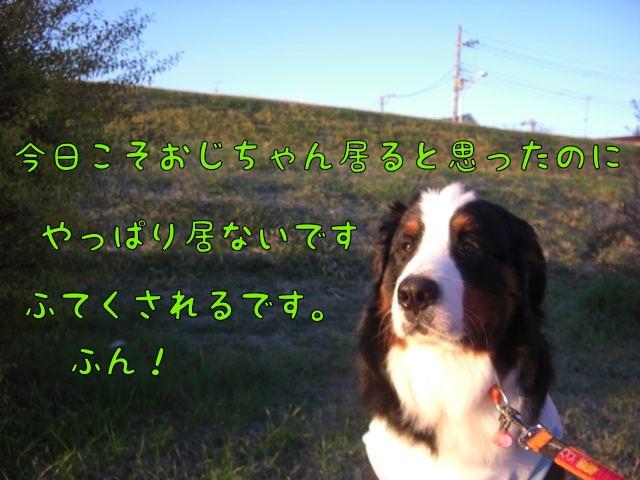 CIMG6148.jpg