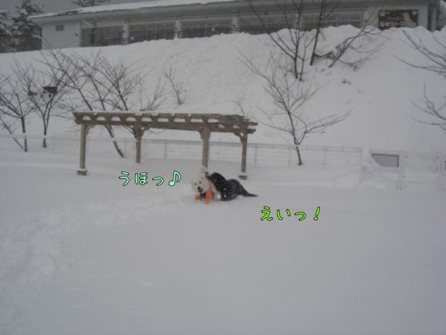 CIMG6956.jpg