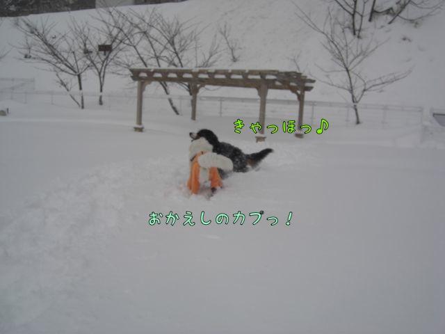 CIMG6957.jpg