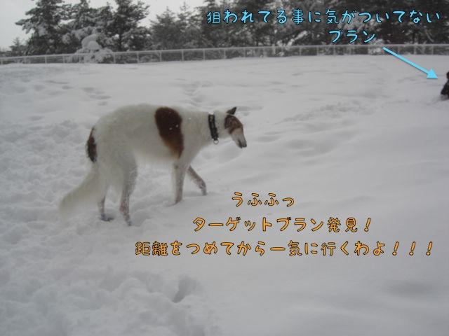 CIMG6974.jpg