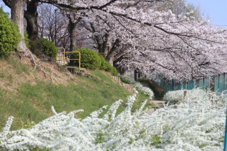 春こらぼ2013