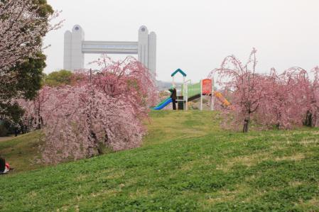 白鳥公園。_800