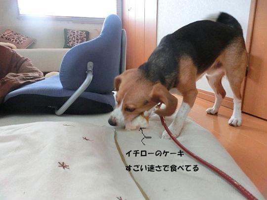 CIMG6846_copy2.jpg