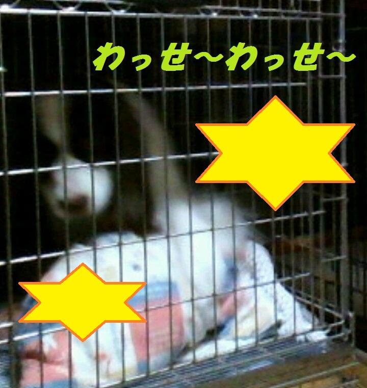 CAM-B653_20130807164559 ブログ用 わっせ~わっせ~