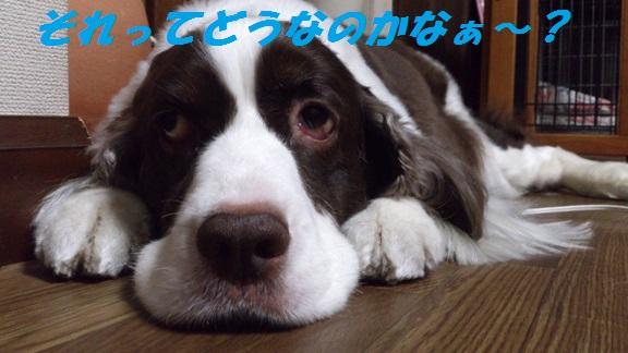 DSC_0375 ブログ用 それってどうなのかなぁ~?