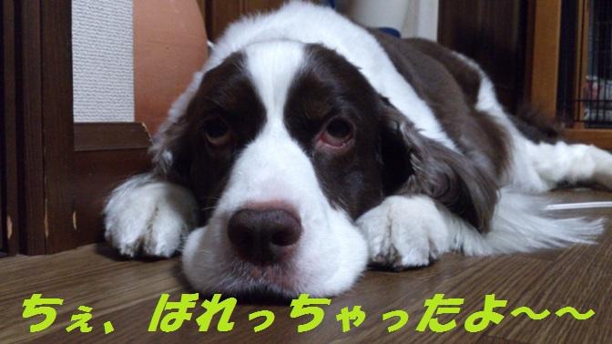 DSC_0374 ブログ用