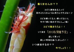 20130511213935a51[1]