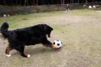ボール好きなキャロン